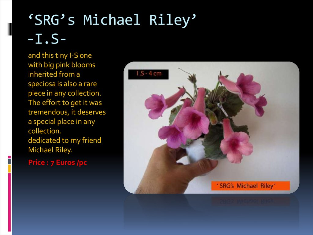 'SRG's Michael Riley' -I.S-