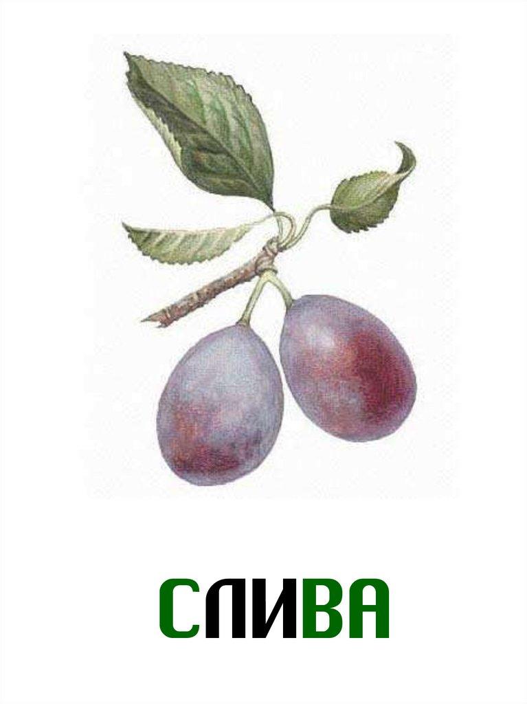 Секреты выращивания авокадо в домашних условиях  Ботаничкаru