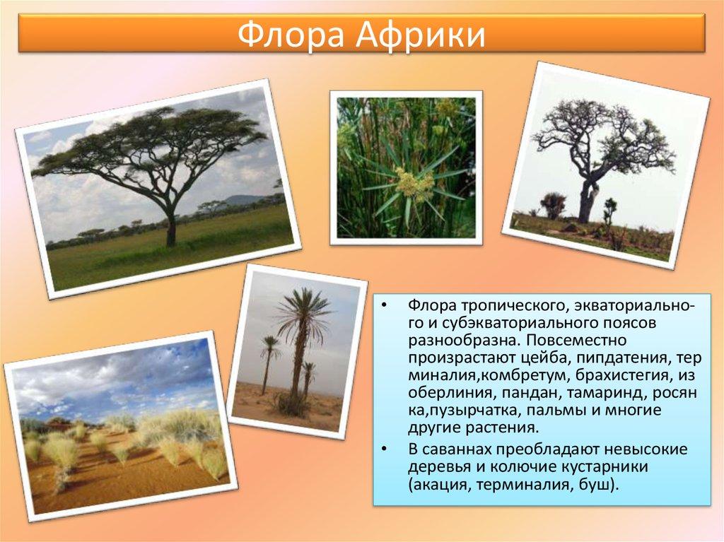 растения африки картинка с названиями очень