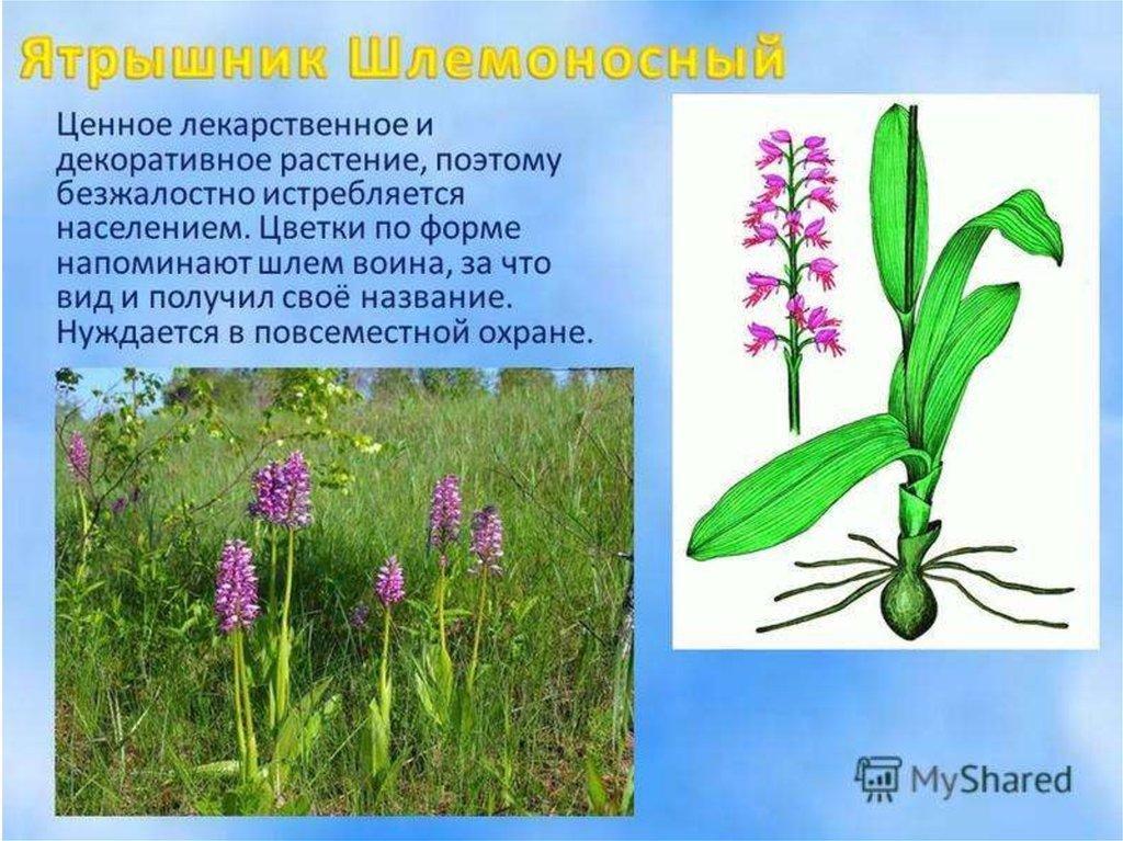 растения оренбургской области фото с названиями и описанием будучи маленьким