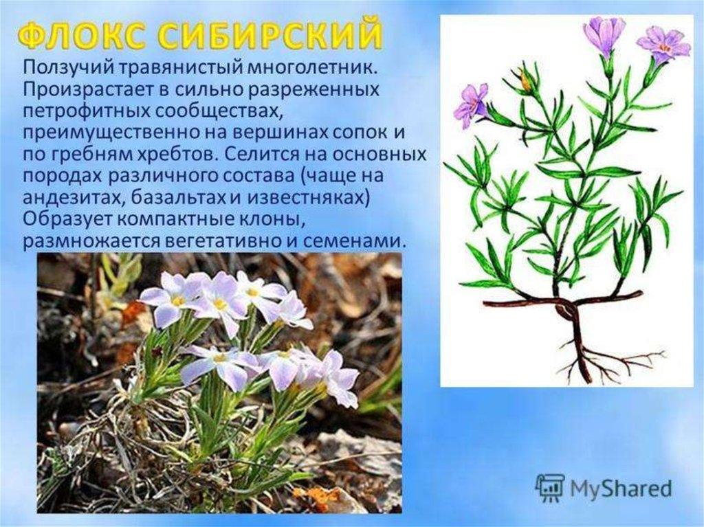 Растения оренбургской области с картинками