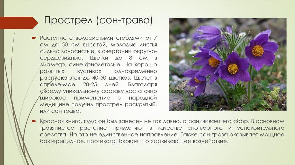 это значит, сон трава фото и описание где растет некоторых украшений