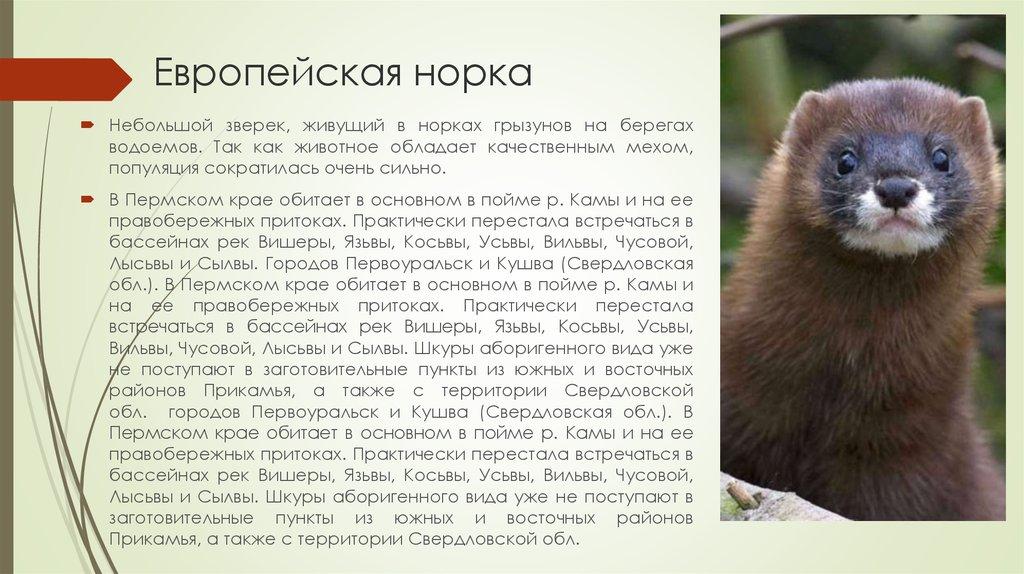 Красная книга пермского края животные фото и описание полный список