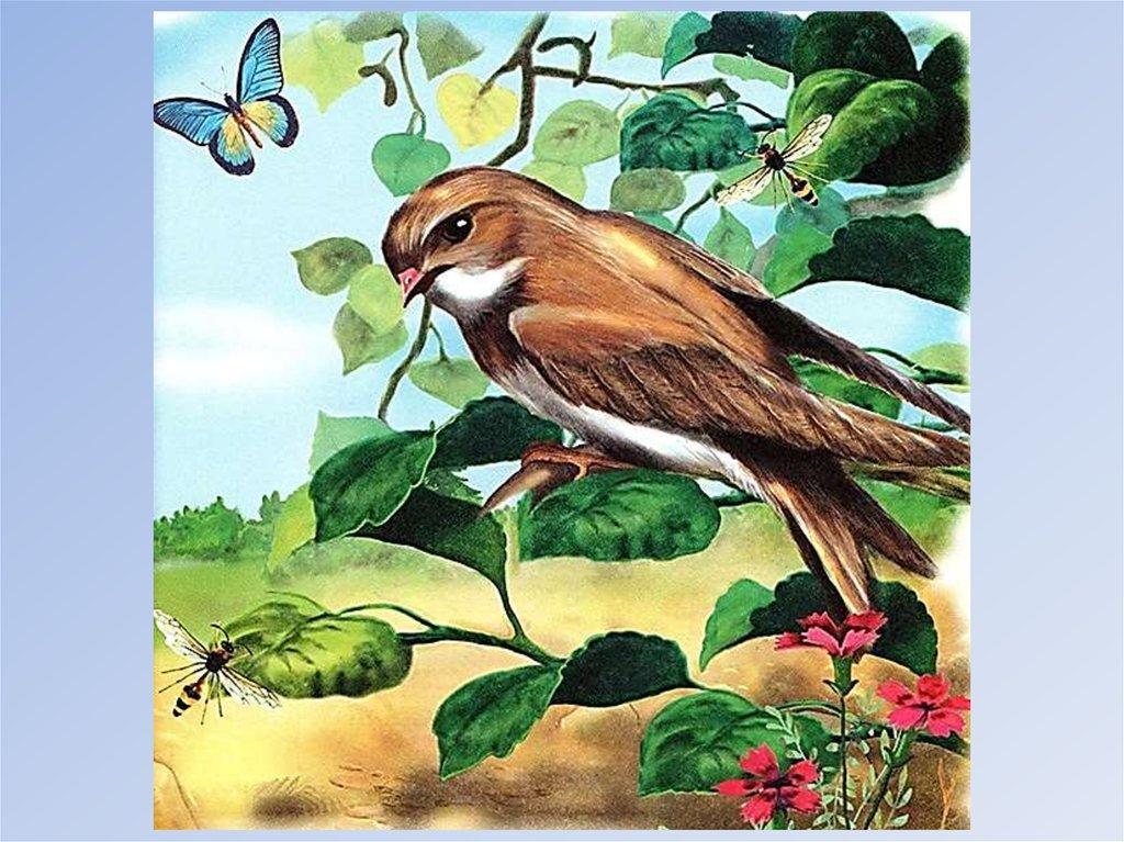 Картинки бианки лесные