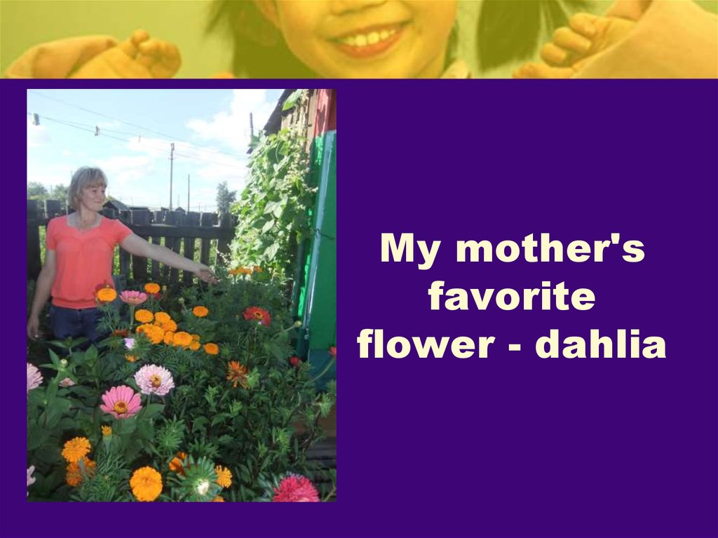 My mother's favorite flower - dahlia