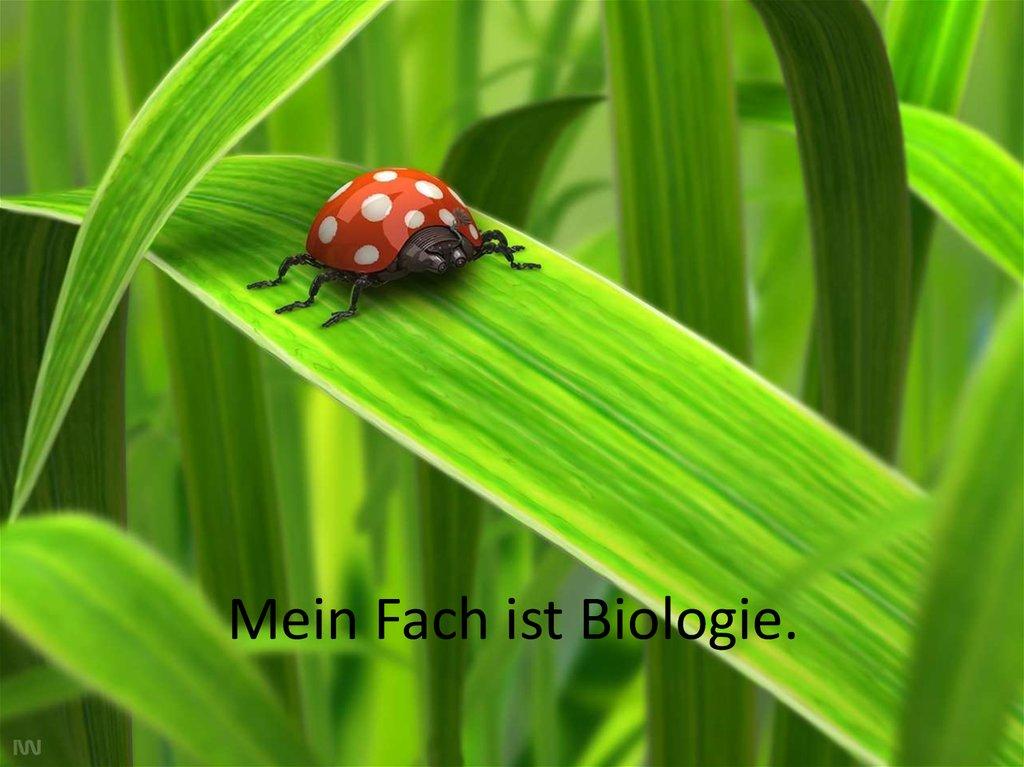 Mein Fach ist Biologie - online presentation