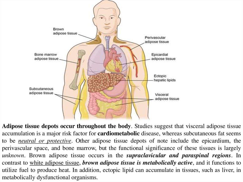 Immunophysiology of obesity - online presentation