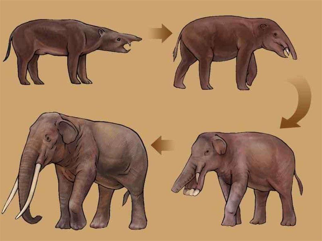 evolution of animals - 1024×767