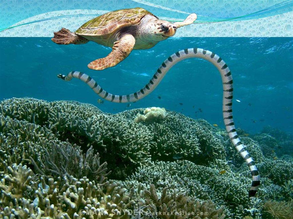 какие змеи обитают на мальдивах фото четырех часов корабли