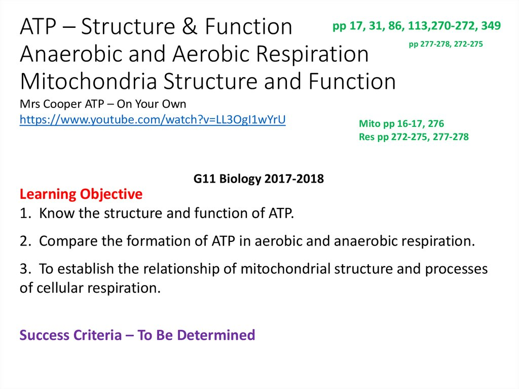 Atp Structure Function Anaerobic And Aerobic