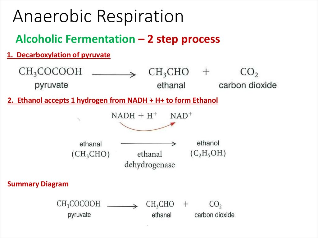 adenosine triphosphate and aerobic respiration Adenosine triphosphate, the primary energy carrier in living things: mitochondria:  the three stages of aerobic cellular respiration are glycolysis.
