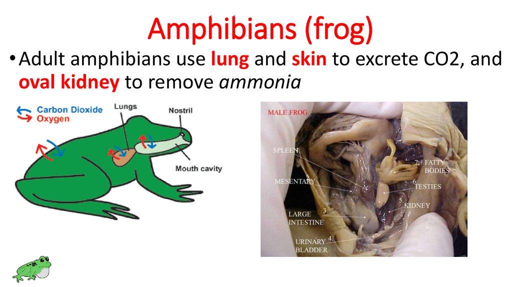 Animals Excretion