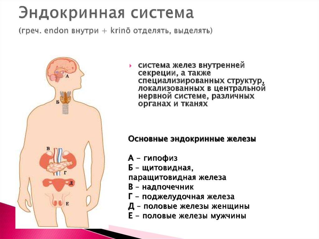 Полипептиды инсулин гормон роста интерферон метод лоури олигопептиды