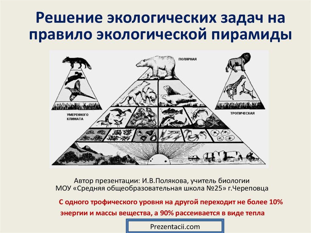 Задачи на правило экологической пирамиды с решением решения олимпиадных задач по математике 6 7