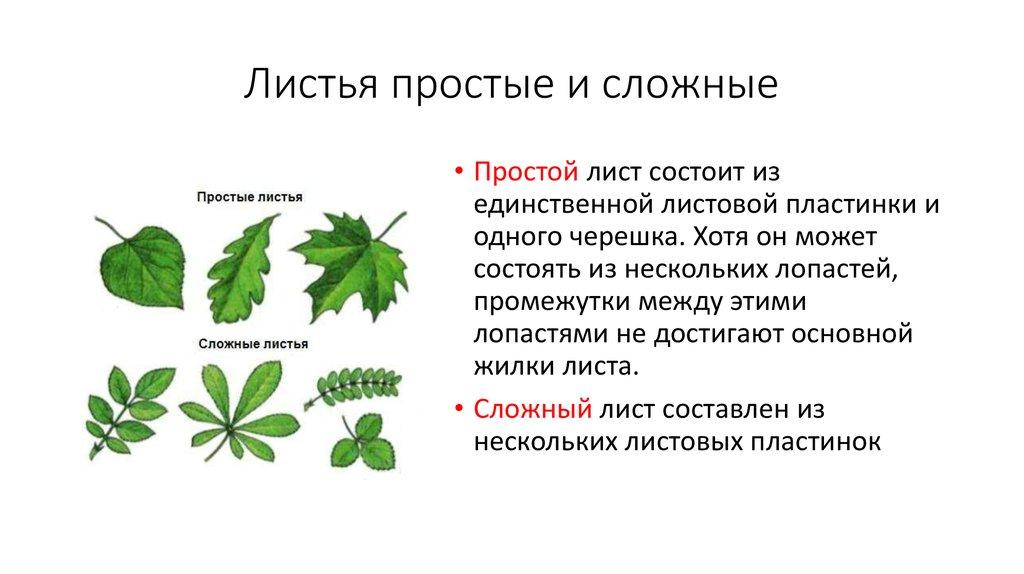 картинки простые и сложные листья примеры картинки певица