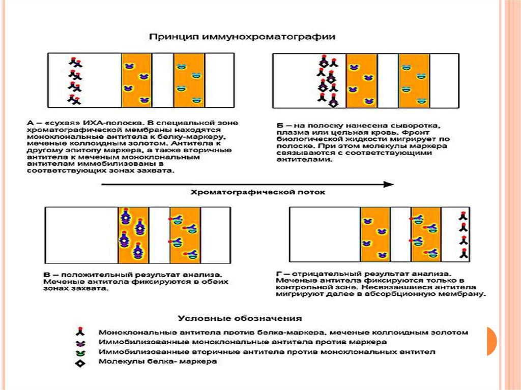 Иммунохроматографический анализ крови на вич Медотвод от прививок Ивановское