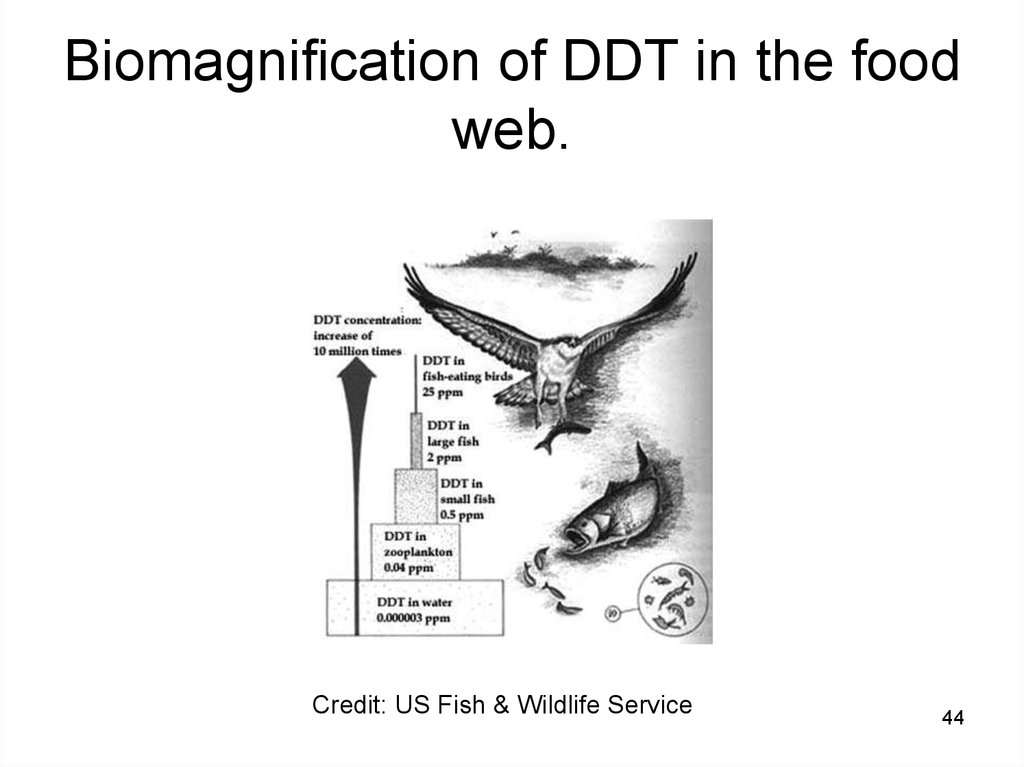 Biomagnification of DDT in the food web.